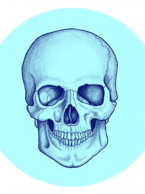 Framsida 1 skalle